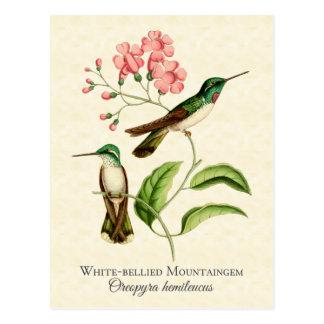 Carte postale d'art de colibri de gemme de