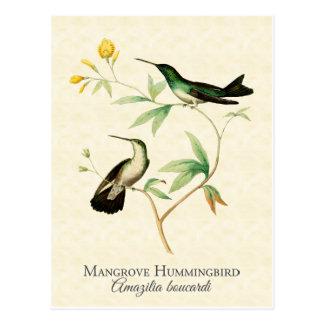 Carte postale d'art de colibri de palétuvier