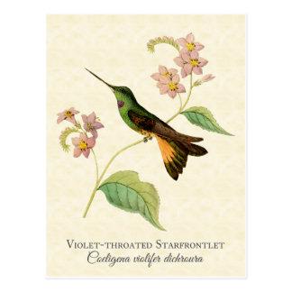 Carte postale d'art de colibri de Starfrontlet