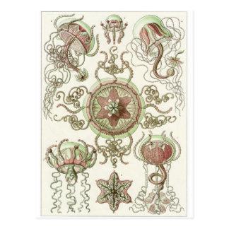 Carte postale d'art d'Ernst Haeckel :