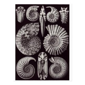 Carte postale d'art d'Ernst Haeckel : Ammonitida