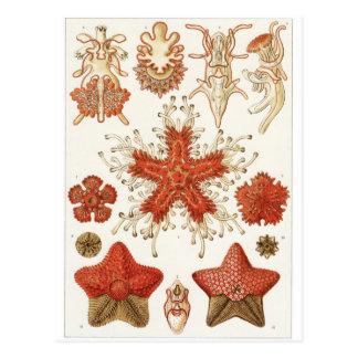Carte postale d'art d'Ernst Haeckel : Asteridea