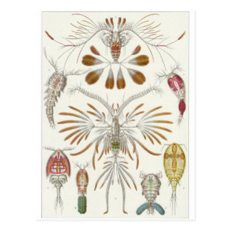 Carte postale d'art d'Ernst Haeckel : Copepoda