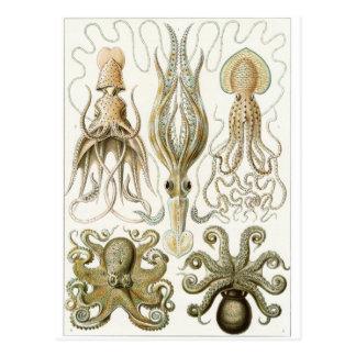 Carte postale d'art d'Ernst Haeckel : Gamochonia