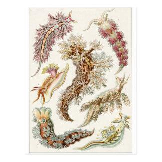 Carte postale d'art d'Ernst Haeckel : Nudibranchia