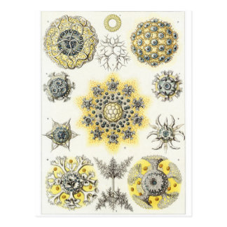 Carte postale d'art d'Ernst Haeckel : Polycyttaria