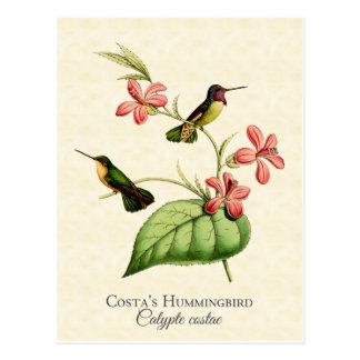 Carte postale d'art du colibri de la côte