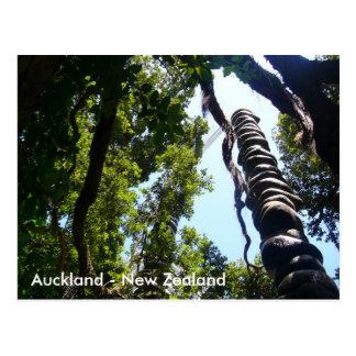 Carte postale d'Auckland