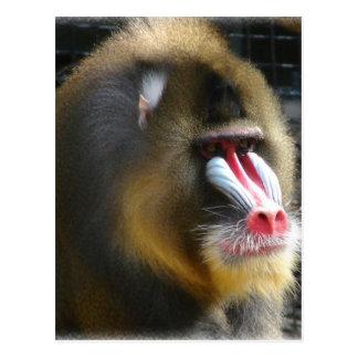 Carte postale de babouin