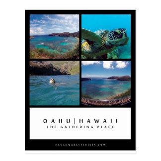 Carte postale de baie d'Oahu Hawaï Hanauma