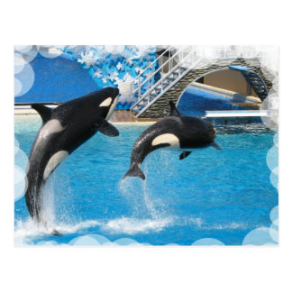 Carte postale de baleines d'orque