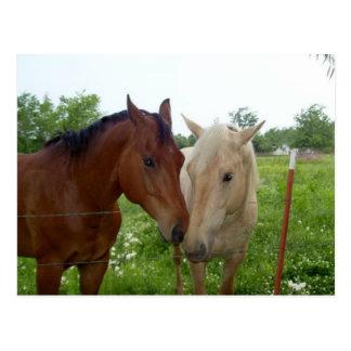 Carte Postale De BFF de meilleurs amis chevaux pour toujours -