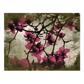 Carte postale de branches de fleur de framboise de