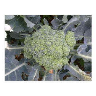Carte postale de brocoli