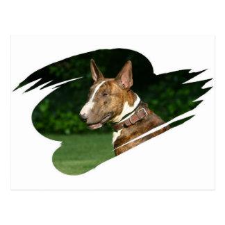 Carte postale de bull-terrier