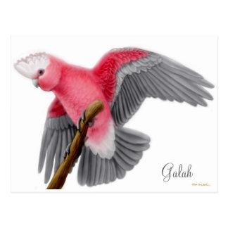 Carte postale de cacatoès de Galah