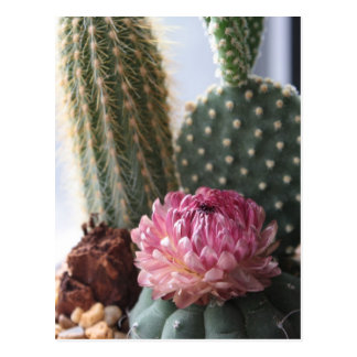 Carte postale de cactus de 8h37 de Romains