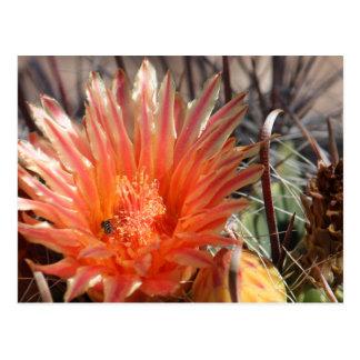 Carte postale de cactus de baril