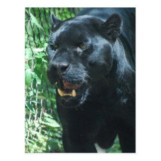 Carte postale de chat de panthère noire