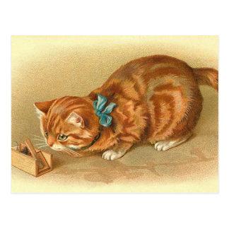 """Carte postale de """"chat et de souris"""""""