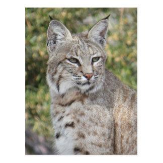 Carte postale de chat sauvage de désert