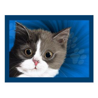 carte postale de chaton