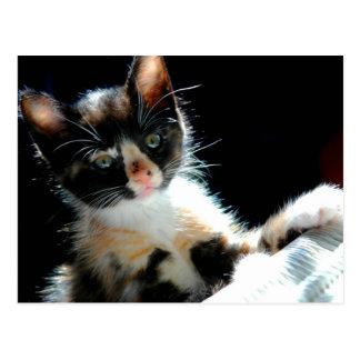 Carte postale de chaton de calicot