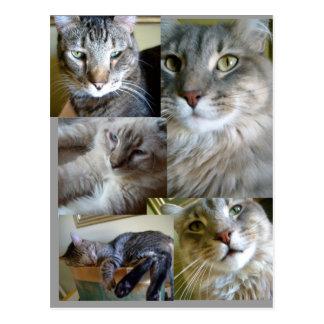 carte postale de chats de collage…