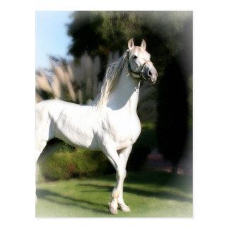 Carte postale de cheval blanc