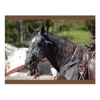 carte postale de cheval, cheval de traînée