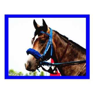Carte postale de cheval de course