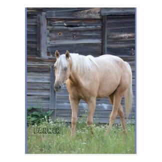 Carte postale de cheval de palomino
