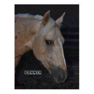 Carte postale de cheval de palomino de Banner