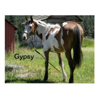 carte postale de cheval de pouliche de pinto