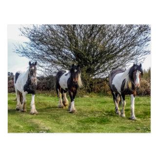 Carte postale de chevaux