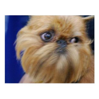 Carte postale de chien de griffon de Bruxelles