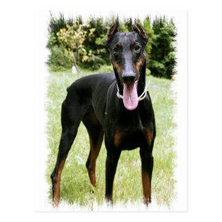 Carte postale de chien de Pinscher de dobermann