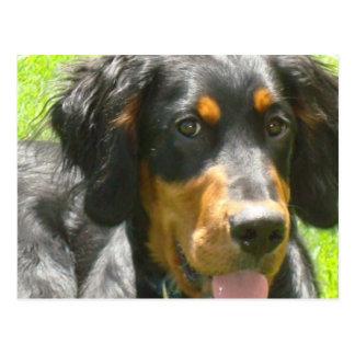 Carte postale de chien de poseur de Gordon
