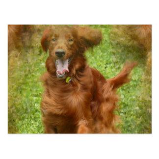 Carte postale de chien de poseur irlandais