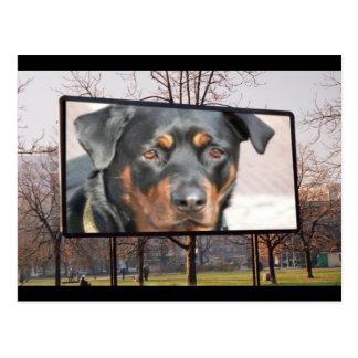 Carte postale de chien de rottweiler