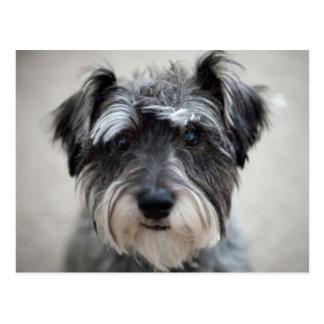 Carte postale de chien de Schnauzer