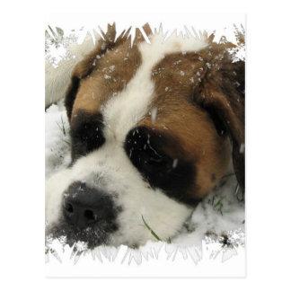 Carte postale de chien de St Bernard