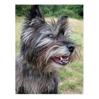 Carte postale de chien de Terrier de cairn