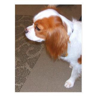 Carte postale de chien d'épagneul