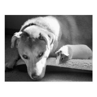 Carte postale de chien et de cobaye