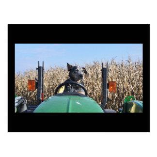 Carte postale de chien sur le tracteur
