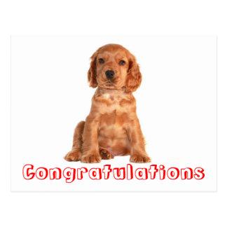 Carte postale de chiot de cocker de félicitations