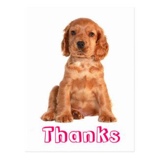 Carte postale de chiot de cocker de Merci
