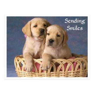 Carte postale de chiot de labrador retriever de