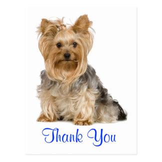 Carte postale de chiot de Yorkshire Terrier de